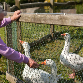Feeding the ducks at Killure Bridge Nursing Home